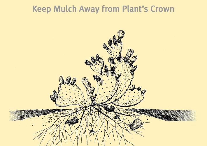 mulchawaycrown